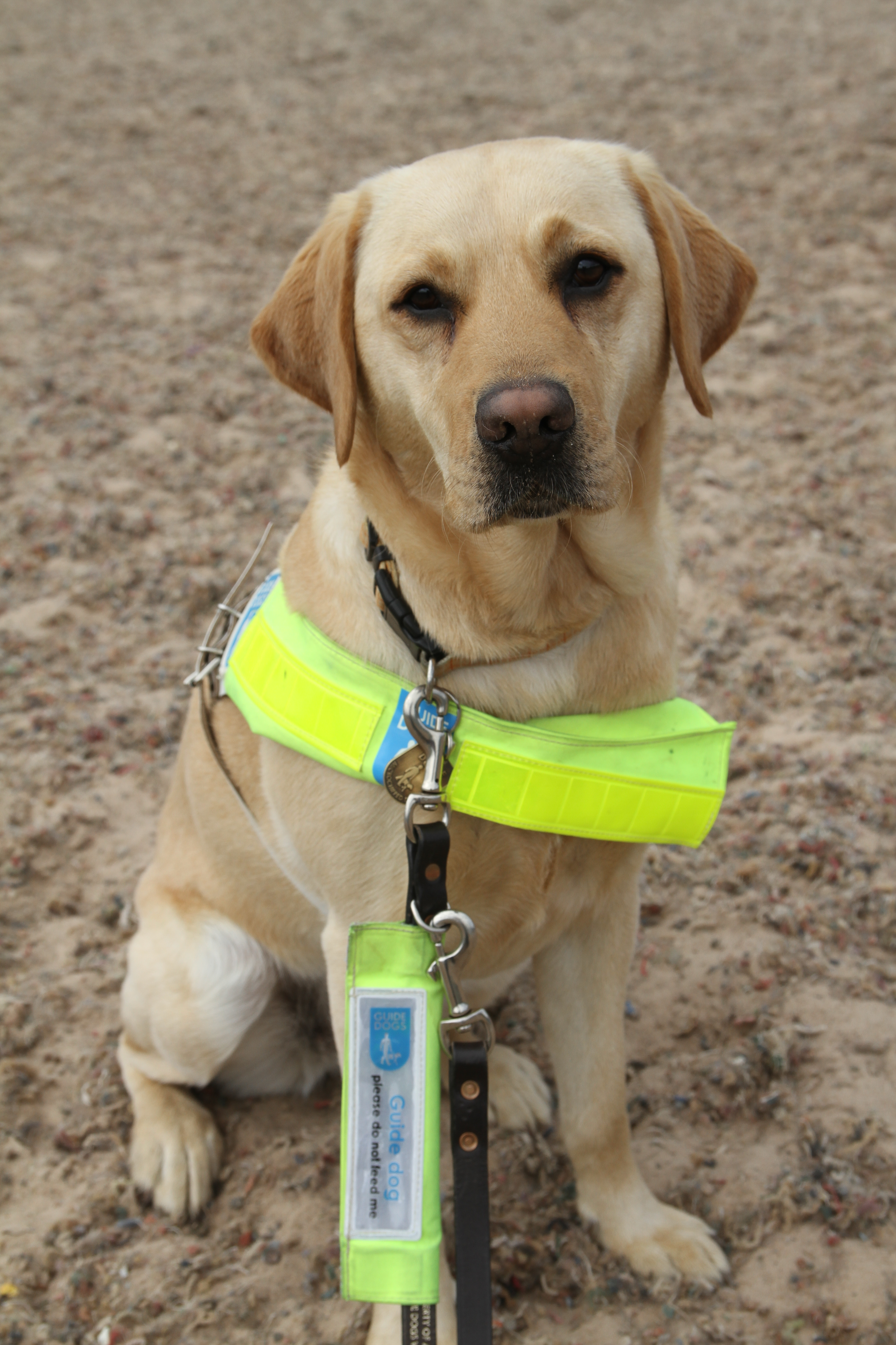 Sparky Greenhill - Guide Dog
